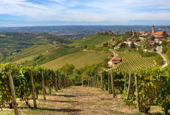 Cantine Aperte in Vendemmia 2018 in Campania